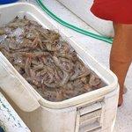 Shrimp by the bucket full