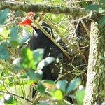 Woodpecker pecking away!