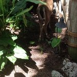 Deer on Little Palm
