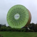 kiwifruit icon in Te Puke