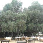 l'Acebuche et la terrasse du restaurant