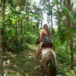 Tour through the jungle