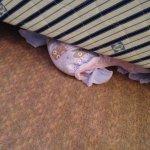 Nappy under my bed!