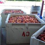 Local peaches for Peach wine
