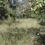 The Texas Road a/k/a The Sedalia Trail