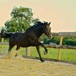 cheval du mas