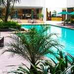 pool side near tosca