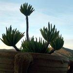 Plant on balcony