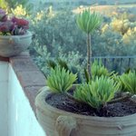 Plants and Olive Grove