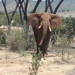 Elefante a Tsavo East