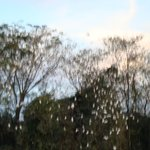 Revoada das gaivotas - todo entardecer