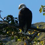 Our first sighting of a bald eagle