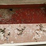 La ventana de la habitación da a una terraza pequeña que esta llena de excrementos de palomas