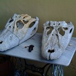 Cool the croco's skulls