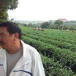 Tea plantation with Nghiep, awesome guy!!