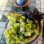 Freshly picked grapes