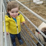 Ben loving the sheep!