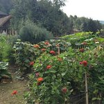 Garden and lodging