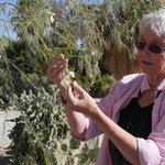 Enjoy free nature walks with Pat our naturalist, weekend mornings