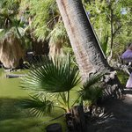 Discover wildlife around the pond at the Oasis of Mara
