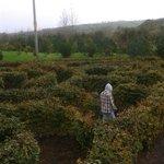 A maze ing