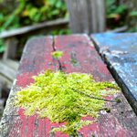 old picnic table on the grounds of the B&B