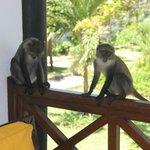 Besucher unseres Balkons