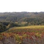 Виноградники в Лукарелли