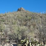 Back looking up the hill.  Mucho cactus