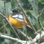 One of many birds