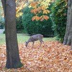 Deer in yard across the street
