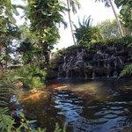 Beautiful koi pond!