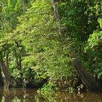 A piece of The Kinabatangan River