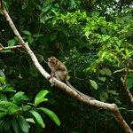 Monkeys around