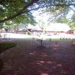 Under the Big oak tree
