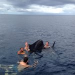 Swimming with sail after release