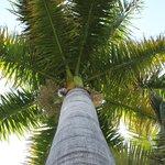 The Palm El Palmar Guesthouse