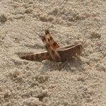Wild life sun bathing on beach