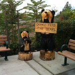 The Black Bear Welcomes Us!