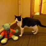 Charlie's new Scottish friend Watson