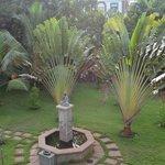 fontaine avec palmiers du voyageur