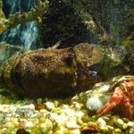 Crab, hermit crab and slipper lobster