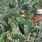 cactus devant la serre