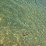 Playa prístina