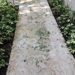 Mossy slipery pathway