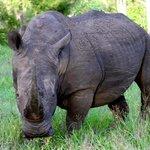 Rhino checking us out