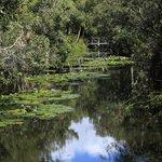 Lotus Pools