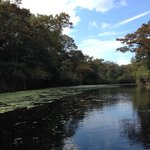 Ebenezer Creek and it's beautiful duckweed