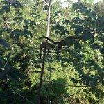 Vue du balcon!!! Direct sur la Jungle et les Coatis!!!