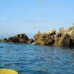 sea lions basking on the rocks